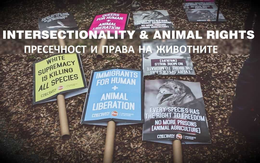 Intersectionality & Animal Rights